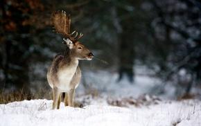 horns, animals, deer, winter, nature
