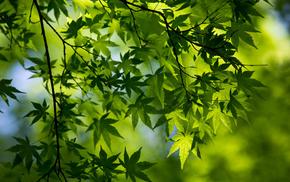 spring, green, foliage, branch, macro