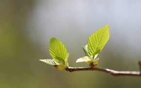 branch, leaves, spring, greenery, macro