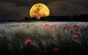 flowers, wheat, moon, field, night