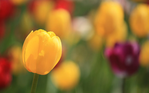 spring, flower, bokeh, flowers