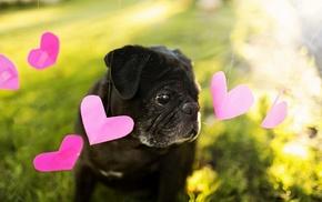 dog, animals, heart, background