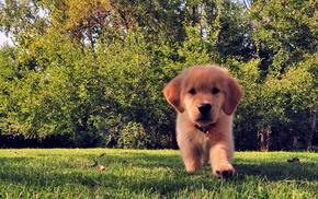 puppy, dog, animals, summer, grass