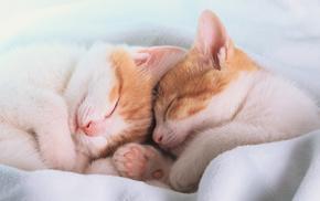 kittens, animals, ears, sleeping