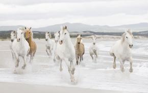 coast, animals, horses, sea