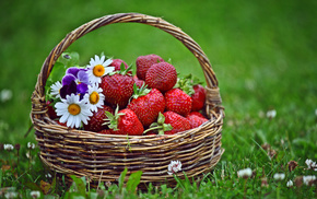 цветы, трава, клубника, вкусно, Корзинка