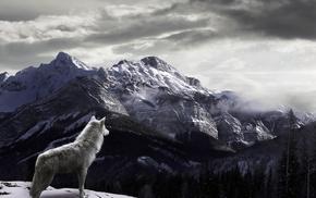 животные, туман, горы, снег, Волк
