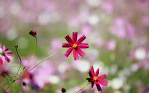 bokeh, flowers, macro, petals, motion blur