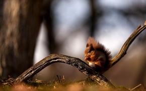 forest, red hair, squirrel, sit, branch