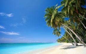 palm trees, sea, nature, tropics, sand