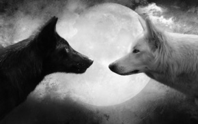 wolf, white, animals, moon, black