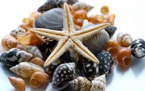 макро, Природа, ракушки, морская звезда