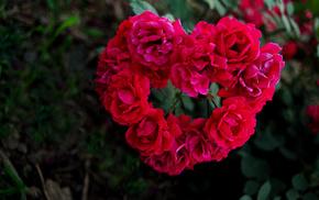 petals, roses, heart, motion blur, flowers