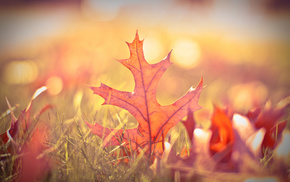 bokeh, greenery, leaves, autumn, macro