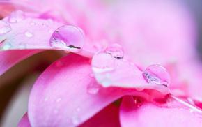 pink, flowers, flower, petals, macro