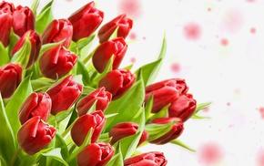 tulips, bouquet, flowers