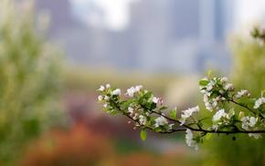 branch, spring, color, bokeh, macro