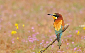 bird, flowers, animals