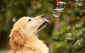 играет, Собака, пузыри, животные