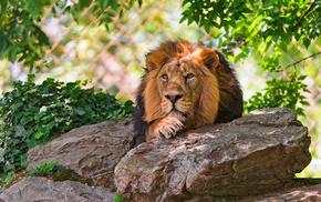 animals, lies, rest, lion, stones