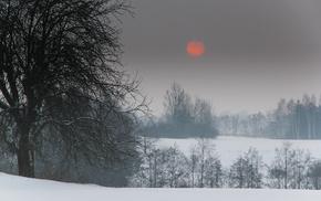 nature, trees, snow, winter, Sun