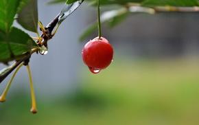 summer, cherry, drops, macro, delicious