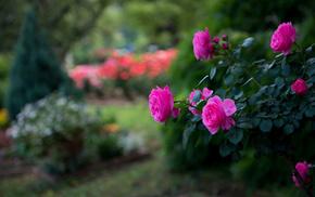 shrubs, pink, flowers, motion blur, park