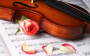 violin, stunner, rose, beautiful