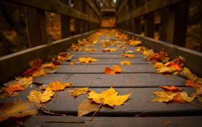 tree, macro, autumn, foliage