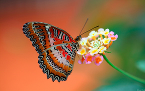 wings, flower, animals, background, butterfly