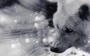muzzle, animals, eyes, wolf
