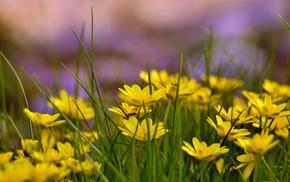 glade, summer, flowers, yellow flowers, grass
