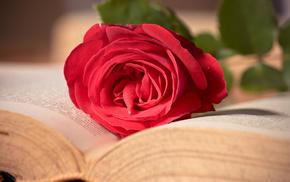 book, flowers, flower, macro, rose