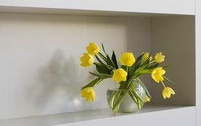 flowers, vase, tulips, water