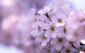 flowers, bloom, tree, spring