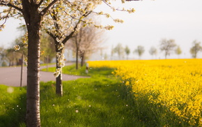 nature, spring, field, tree
