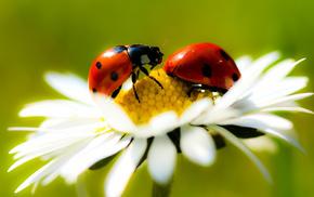 flower, nature