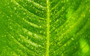 drops, leaf, macro, green