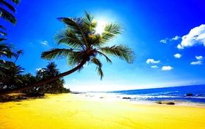 тропики, песок, блики, пляж, пальмы, лето