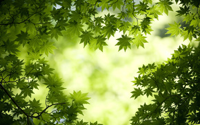 forest, trees, nature, leaves, green