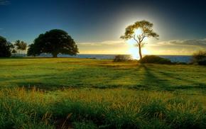 трава, деревья, солнце, природа, закат, Пейзаж
