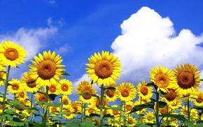 nature, summer, sky, field