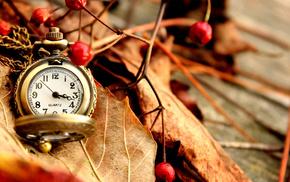 stunner, autumn, clocks, leaves, berries