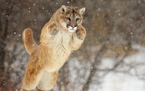 muzzle, snow, bounce, animals