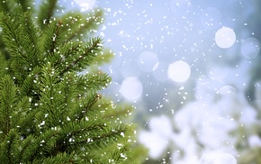 twigs, fir-tree, trees, cold, greenery
