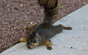 squirrel, animals