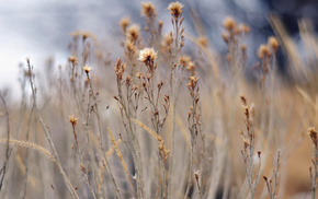 motion blur, plants, bokeh, nature