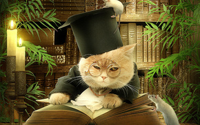 animals, book, cat, situation