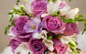 flowers, purple, roses, bouquet
