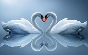 heart, animals, reflection, couple